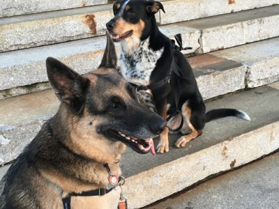 Two dogs sitting down on some stone steps. One is a German Shepherd and the other is a black, tan and white dog